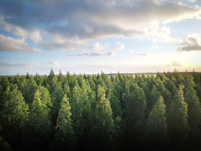 sadnja stabala